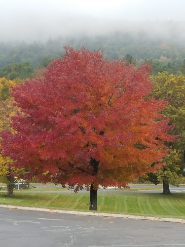 Looking for things to do in the Berkshires?  Be sure to take in the Berkshires' fall foliage!