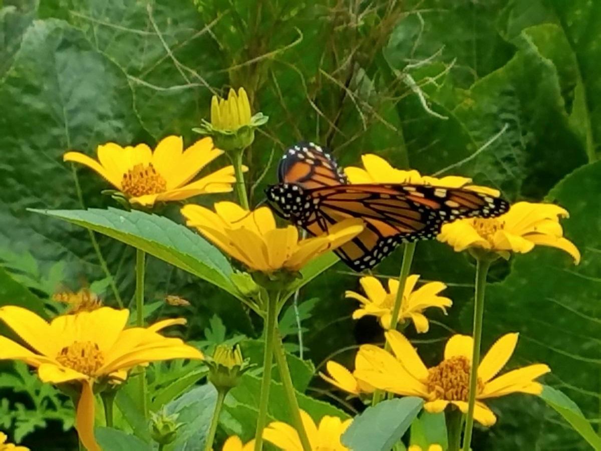 Windflower Inn Flora & Fauna